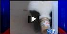 Jon-Stewart-Skunk-Peanut-Butter-140