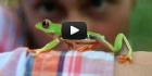 frog140x70