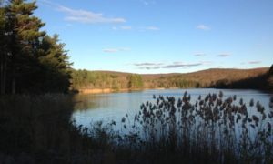 Meshomasic State Forest