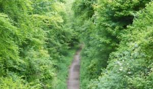 rec trail 2